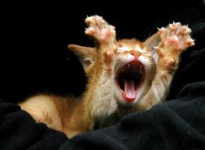 yawning20